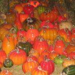 Longwood.GlassPumpkins