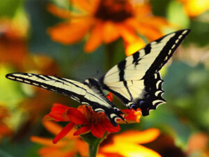 butterfly-midlife-makeover